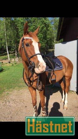 hästnet ponny till salu